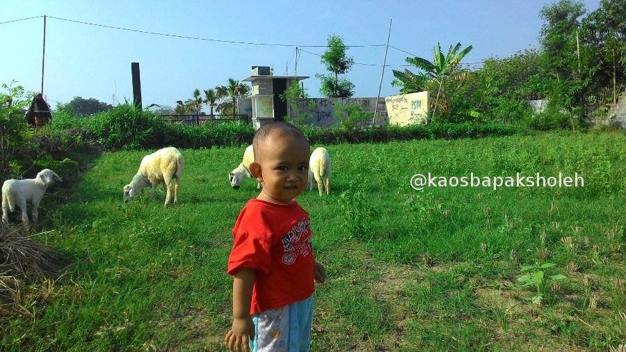Anak Bermain Dengan Kambing