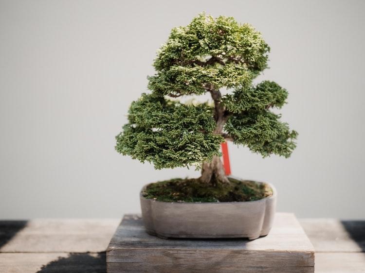 Pohon bonsai cantik untuk menata taman depan rumah, unsplash tegethoff