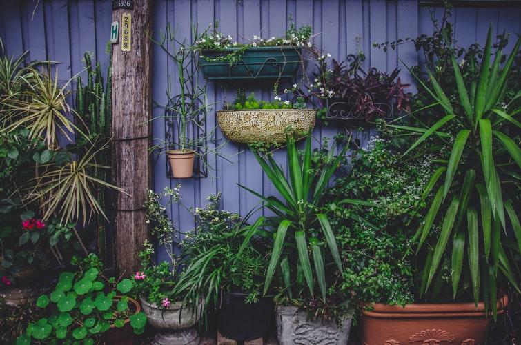 Taman depan rumah konsep vertikal garden, unsplash laicho